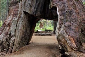 皆に愛されてきた樹齢1000年以上の巨木、暴風雨でなぎ倒され落胆の声が広がる