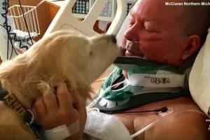 氷点下の屋外で首を骨折し動けなくなった主人のため、愛犬が体を暖め続け命を救う