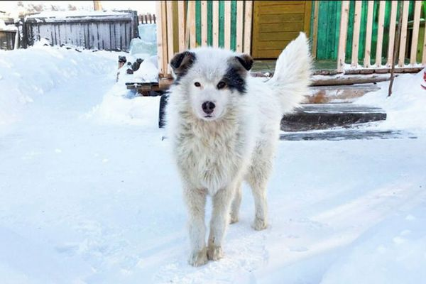 厳寒のロシアで屋外に放置された2歳の子供を、ワンコが2日間も暖め命を救う