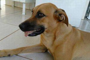 「ウッシシシシ…」裏庭で入れ歯を見つけて喜ぶ犬の姿がユニーク