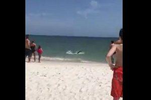 こんなに近くまで…波打ち際にサメが接近してビーチが一時騒然【動画】