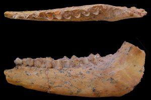 通説より10万年も遡る?30万年前のホモ・サピエンスと思われる化石を発見