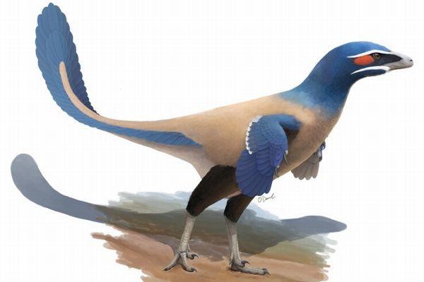 カナダで発見された鳥型恐竜の化石、詳細な分析により新種と判明