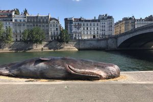 パリのセーヌ川にクジラが打ち上げられる?突然の出来事に市民もビックリ