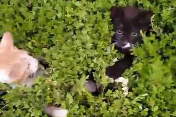 顔を出したり引っ込めたり…草むらで「いないいないばあ」をする子猫がカワイイ