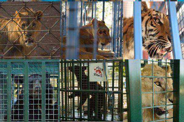 シリアのアレッポで餓死寸前だった動物たち、保護団体が救出に成功