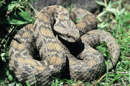 【閲覧注意】卵じゃない!?妊娠したヘビが赤ちゃんを出産する動画が話題に