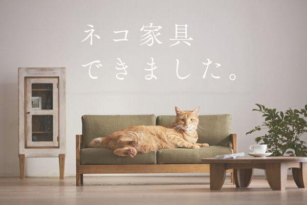 あなたの猫も大満足!大川家具が作る猫専用家具の完成度がすごい