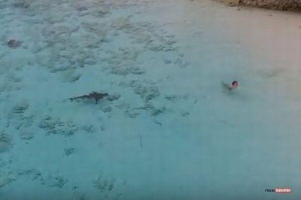 海へ飛び込んだ少年に大型のサメが接近、偶然捉えたドローンの映像が恐ろしい