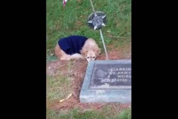 いつも一緒だった亡き飼い主、そのお墓から離れようとしないワンコの姿が胸を打つ