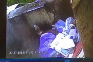 まさに奇跡!ゴミ清掃車に投げ込まれたワンコ、処理場で発見され救出される