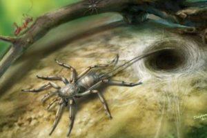 ミャンマーの琥珀から発見されたクモの化石、サソリのような尾がついた新種だと判明