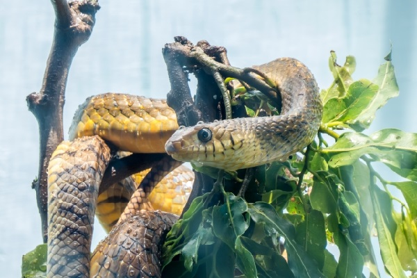 ドイツのスーパーマーケット、店内で女性が蛇に噛まれたとして一時閉鎖に