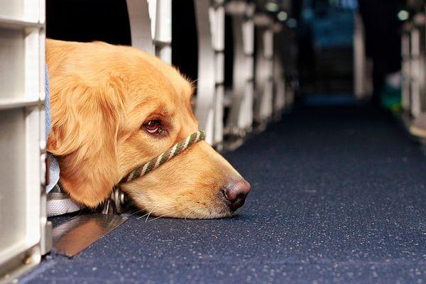 機内で「感情支援動物」の犬に6歳の少女が噛まれ、賛否両論の声が上がる