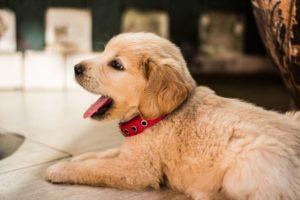 デルタ航空、生後8週間の子犬を誤った場所へ3度も輸送していたことが発覚
