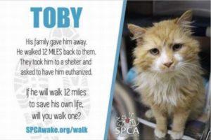 自分を捨てた飼い主の元へ19キロも歩いて戻った猫、再び幸せを手に入れる