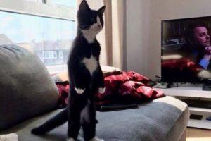 2本足で姿勢よく直立するニャンコ、まるでネコ人間のようだと話題に