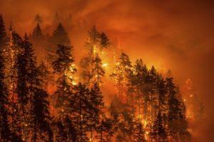 花火で山火事の原因を作った15歳の少年に、40億円の支払い命令!