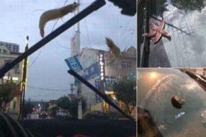 暴風雨が海の生物を吸い上げる?中国で空からエビやタコが降ってきた!