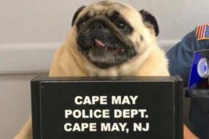 """米警察署が公開した、かわいすぎる""""手配写真""""に思わずほっこり"""