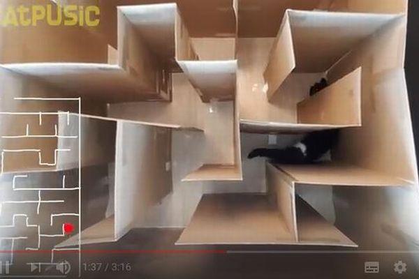 ニャンコは迷路をくぐり抜けられるか?ネコの能力の高さを示す動画が話題に