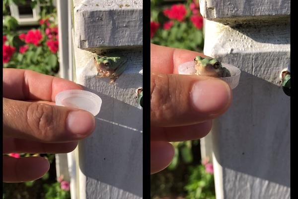 猛暑が生んだ異種間の友情?海外掲示板に投稿されたカエル動画が癒される