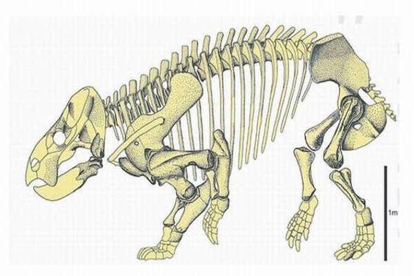 ゾウの大きさの哺乳類に似た爬虫類、ポーランドで化石を発見