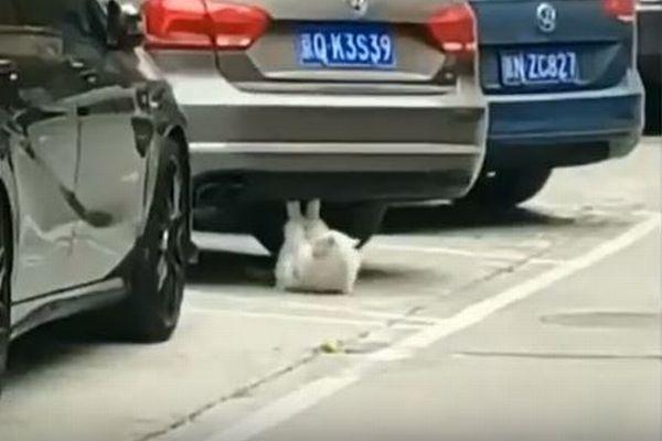 まさかニャンコが腹筋運動?車の下で上半身をくり返し起こす姿がユニーク