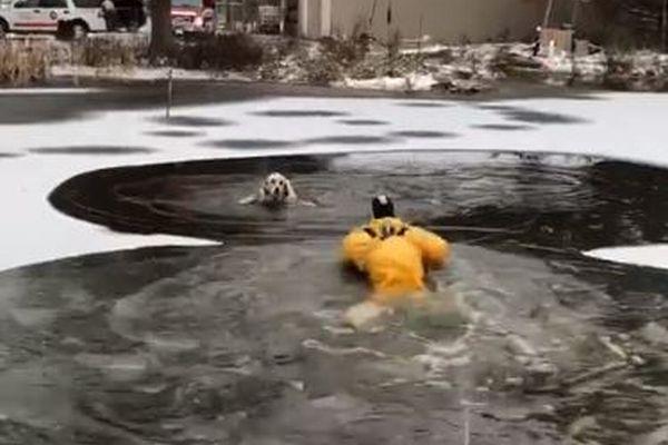 凍った池に落ちてもがくワンコ、消防隊員が冷たい水に入り救助に成功