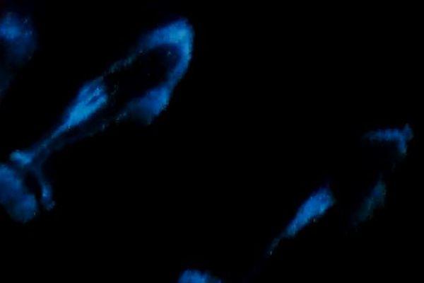 暗い海の中を青く輝きながら泳ぐイルカ、夜光虫に包まれた姿が美しい