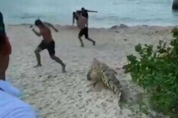 コロンビアのビーチに突然ワニが出現、多くの海水浴客もビックリ!