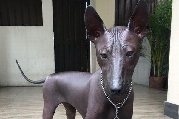 銅像か?それとも本物の犬?毛のないユニークなワンコの写真が話題に