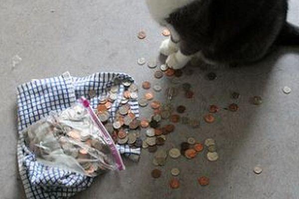 盗み癖のあるイギリスのニャンコ、ついに現金まで家に持ち帰る