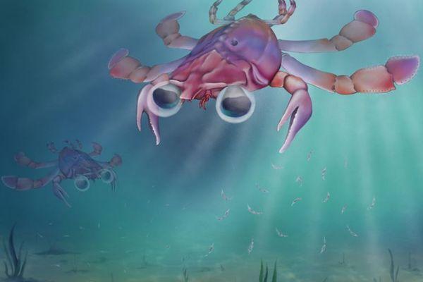 海を泳いでいたと見られる、古代の新たなカニの化石を発見:イェール大学