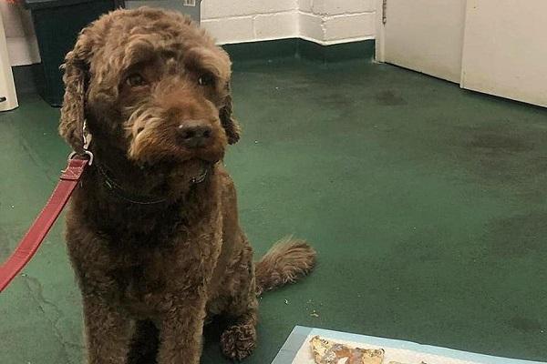 ラブラドール犬、2万円以上の現金を食べてしまい病院に…治療費も2万円近く