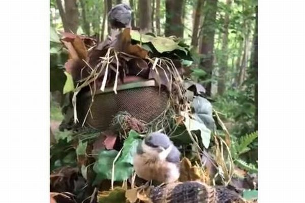 木と間違えちゃった?迷彩服のサバゲー・プレーヤーに小鳥がとまる映像がかわいい