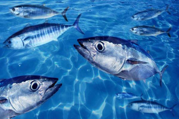 頭も尻尾もない魚の肉が誕生か?米企業が細胞から作られるシーフードを開発中
