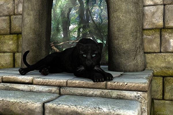 """未確認生物発見か?NZで生息しないはずの""""黒ヒョウ""""のような生物を目撃"""