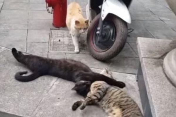まるで浮気現場を目撃されたかのような動画、猫たちのリアクションが面白い【動画】