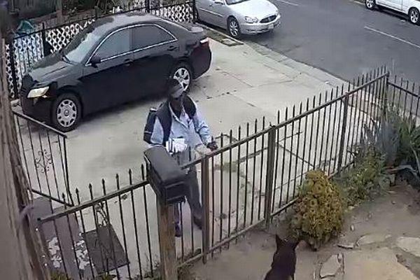 これはひどすぎる!米で郵便配達の女が犬にペッパースプレーを噴射