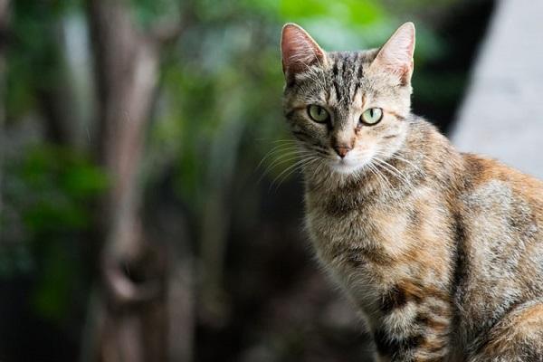 女性が死の危機に…その理由は猫による引っ掻き傷だった!