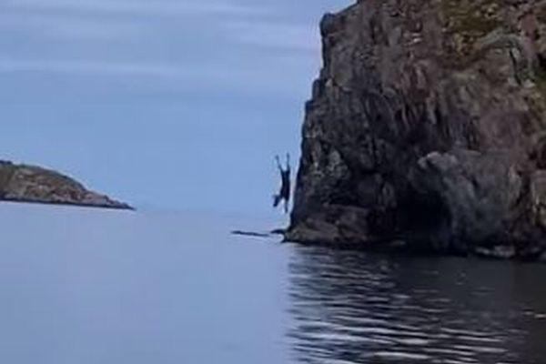 なぜ?ヘラジカが崖の上から海へダイブ、珍しい様子がカナダで撮影される