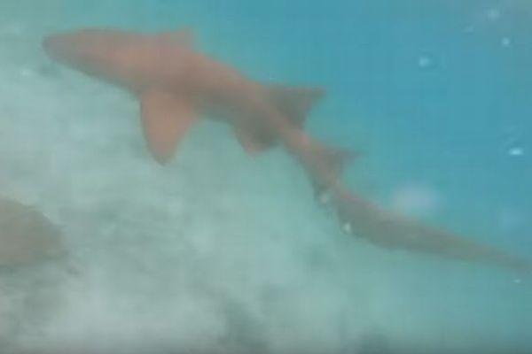 海の中でダイバーが大きなサメに遭遇、追いかけてくる映像が恐ろしい