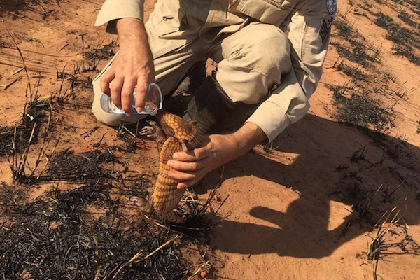 アマゾン火災で焼け出されたアルマジロに水を与える写真が、ブラジルのSNSで拡散中