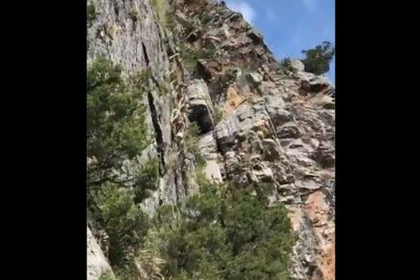 急な崖をヤギが軽々と移動していく動画、不可能すぎる動きに多くの人が困惑