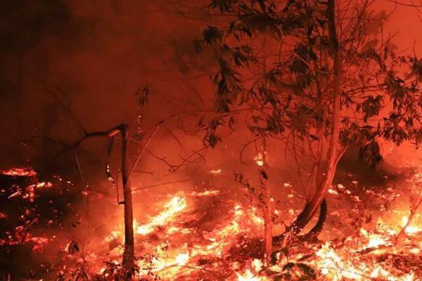 インドネシアで広がる大規模森林火災、警察が原因を作った185人を逮捕