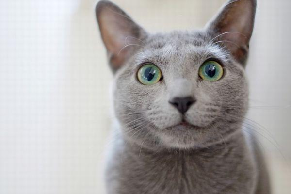 ニャンで?オーストラリアの街でネコの夜間外出禁止令が可決される