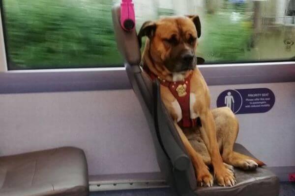 飼い主が捨てた?バスに1匹で残された寂しそうなワンコが目撃される