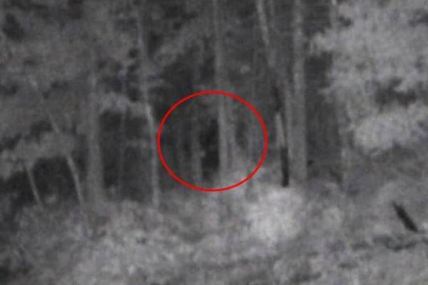 """真相はいかに?米で撮られた未確認生物""""ビッグフット""""の写真が話題に"""