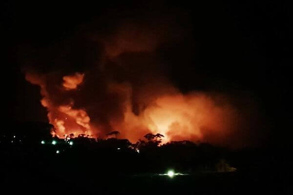 オーストラリアで森林火災が発生、350匹のコアラが大量死の可能性